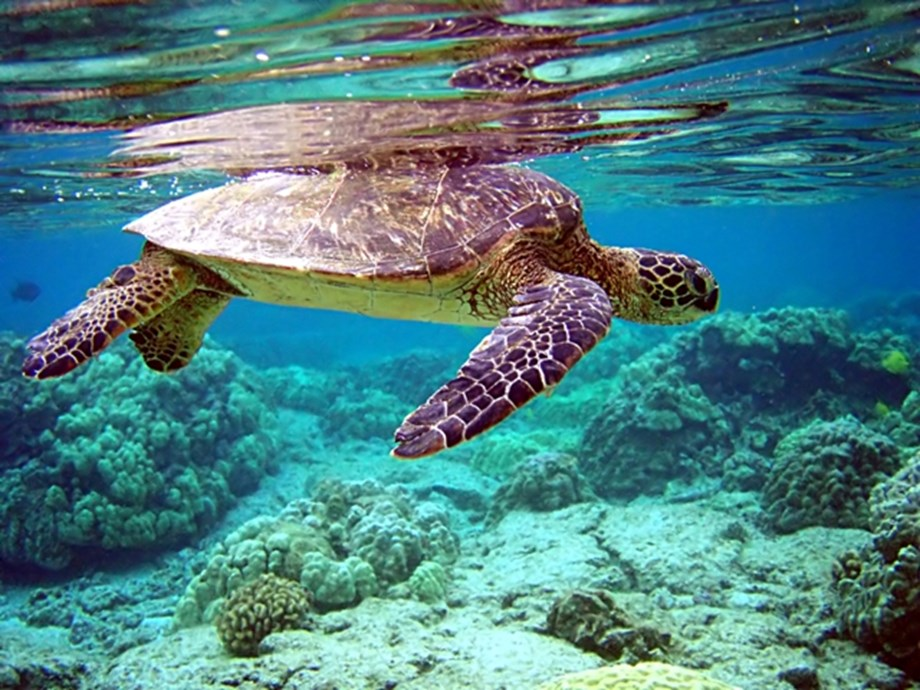 105 turtles eggs shifted from Tamil Nadu beach to hatchery