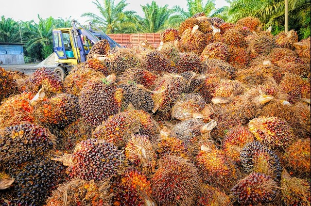 Malaysia may approach WTO if EU restricts use of palm oil