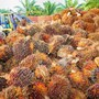 Palm oil producers to set up fund to fight critics