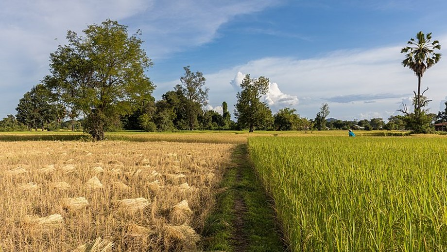 Jharkhand govt to give Rs 150 per quintal extra bonus on paddy