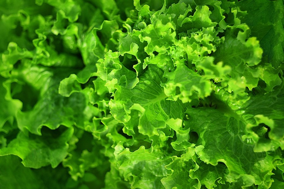 E.coli outbreak linked to romaine lettuce appears to be grown in California