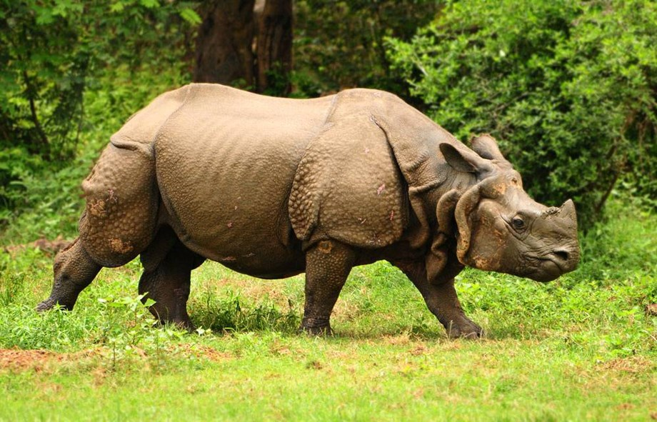 DRC, Uganda join hand to combat illegal wildlife trade, trafficking