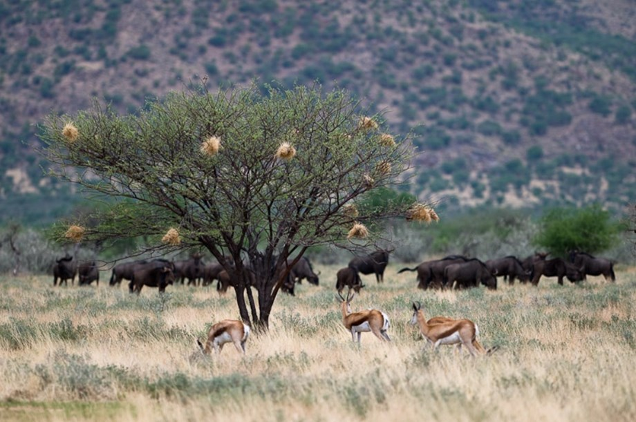 Namibia's biggest private game reserve may go to a Mexican mogul Alberto Baillères