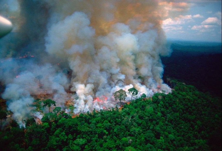 UPDATE 2-Brazil deforestation rises in August, adding to Amazon fire worries
