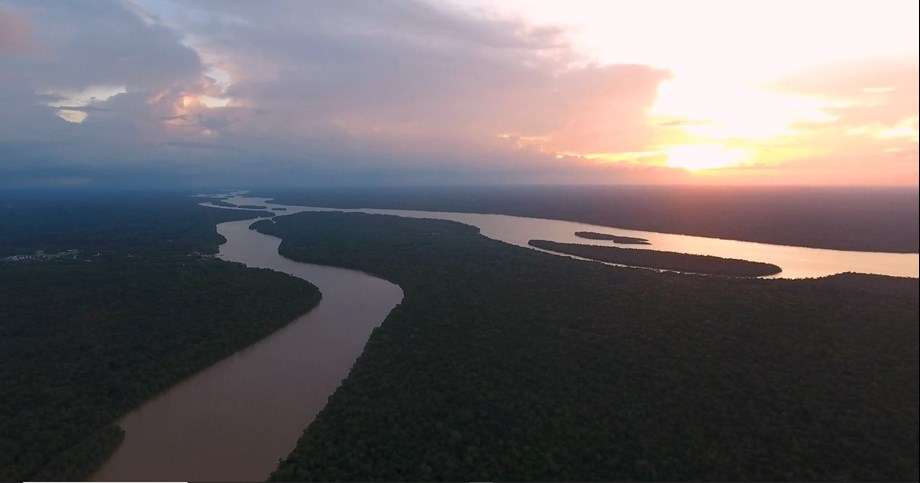 Amazon Rainforest: Tracking the conservation of 'lungs of Earth'