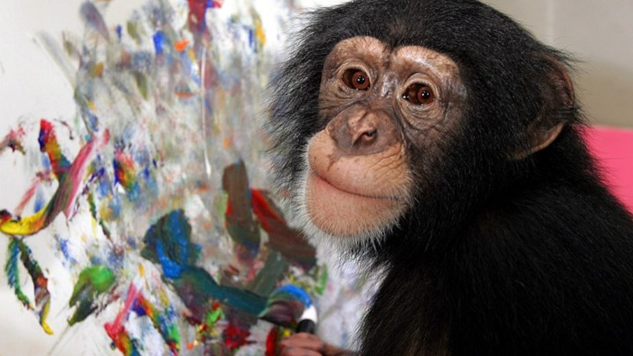 Study reveal chimpanzees can sniff out strangers from family members