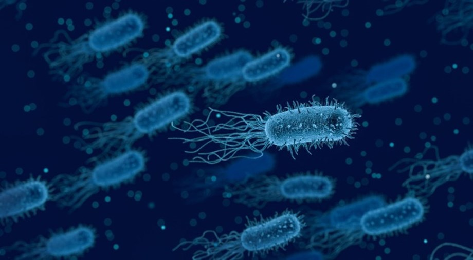 Newly discovered bacteria-killing protein stimulated by dietary vitamin A: Research