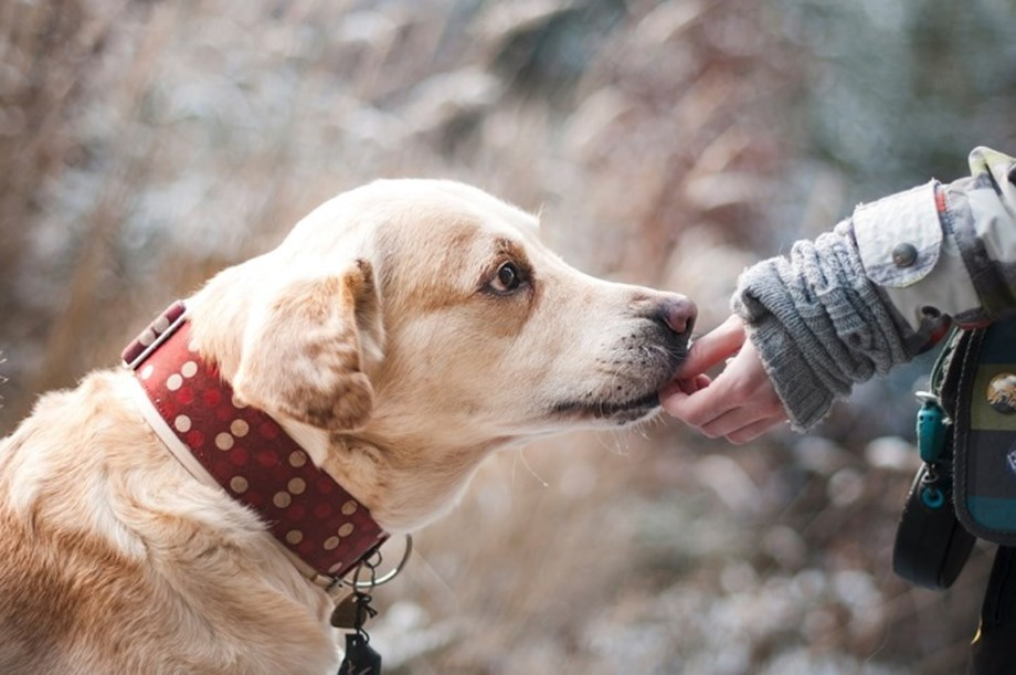 Animals can be relevant therapeutic partners for patients with brain injuries
