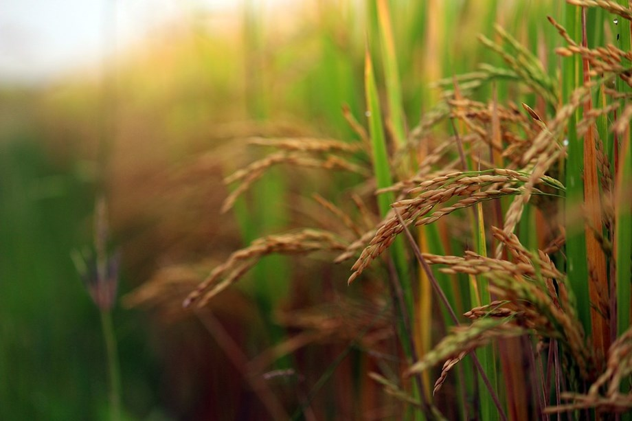 Lag in kharif sowing not cause for concern; will recover as planting still underway: Agri Min official
