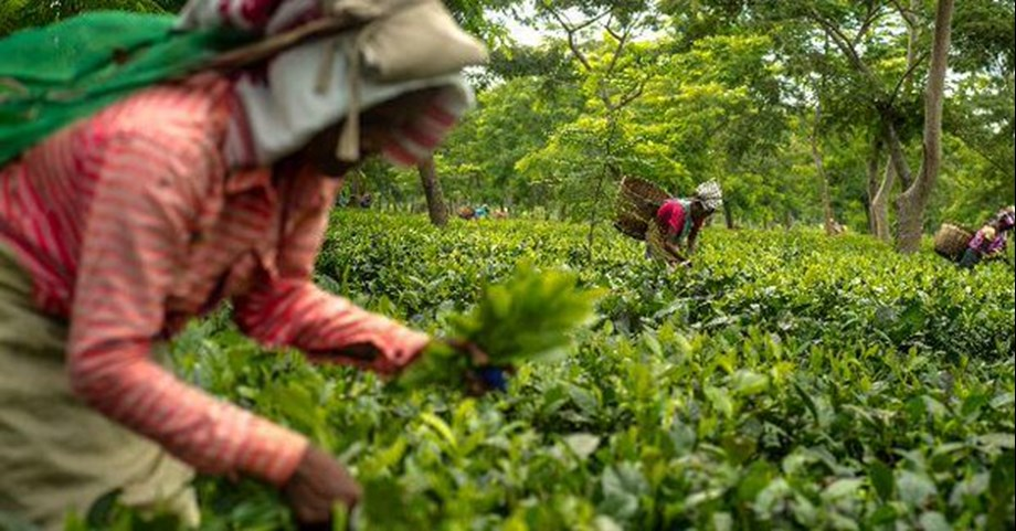 Luxmi Tea acquired gardens in Rwanda, Assam for boost in business