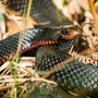 Kenyan researchers work to produce East Africa's first antivenom