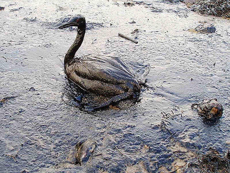 Israeli 2014 oil spill by state-run agency caused 281 million shekels damage, says Environment ministry