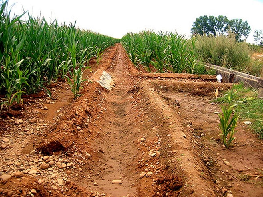 TN govt opposed closing of potato research center
