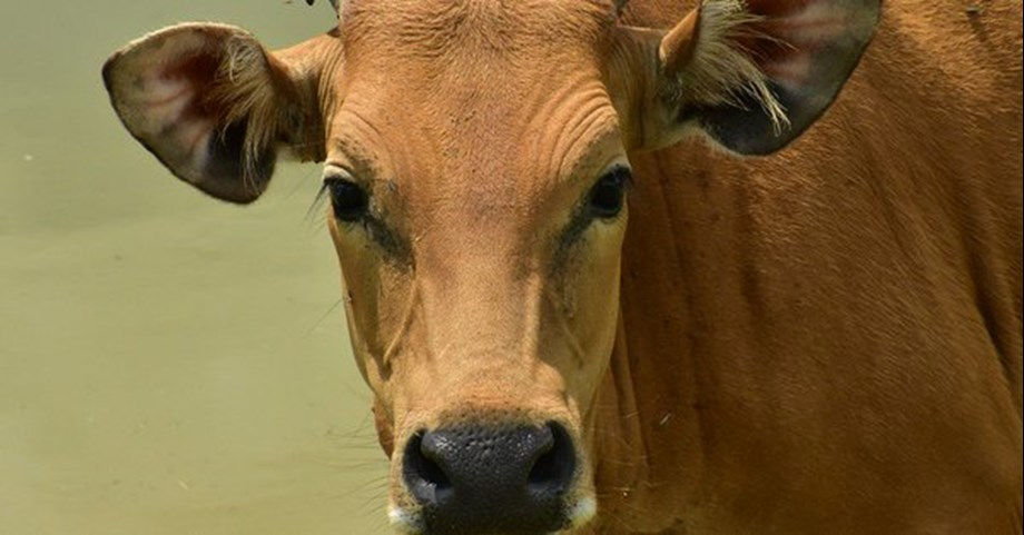 New moo-ment: Australian firm wants to train 2 lakh farmers in dairy skills