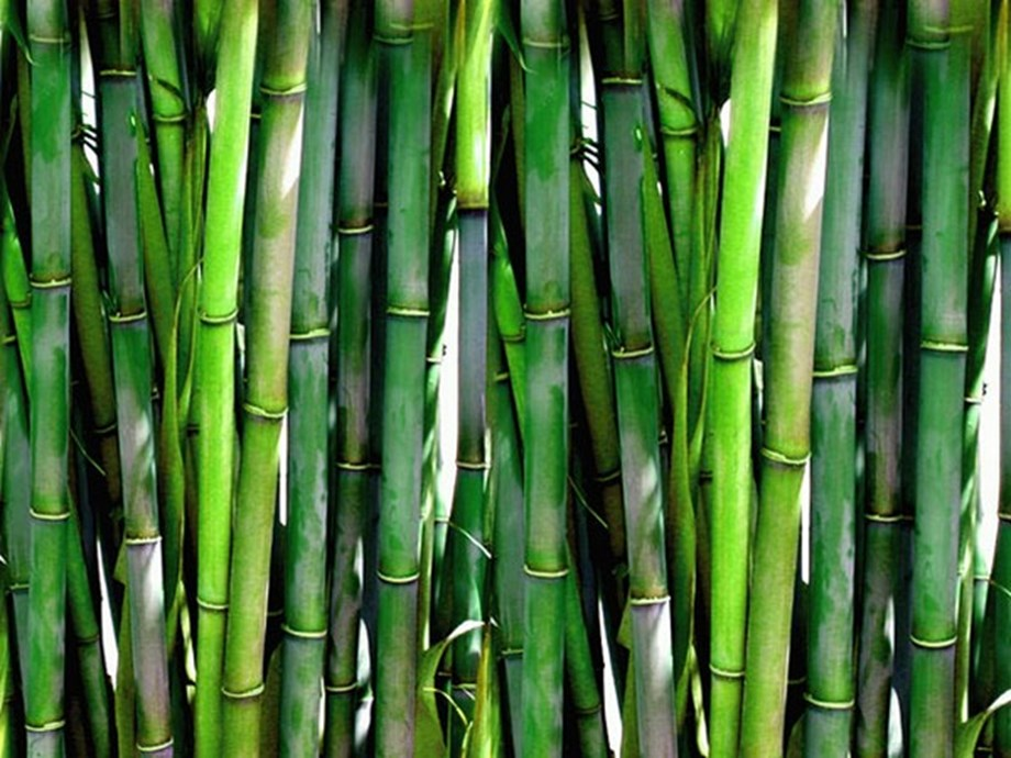 IOMworking with Bangladesh to build sustainable bamboo market