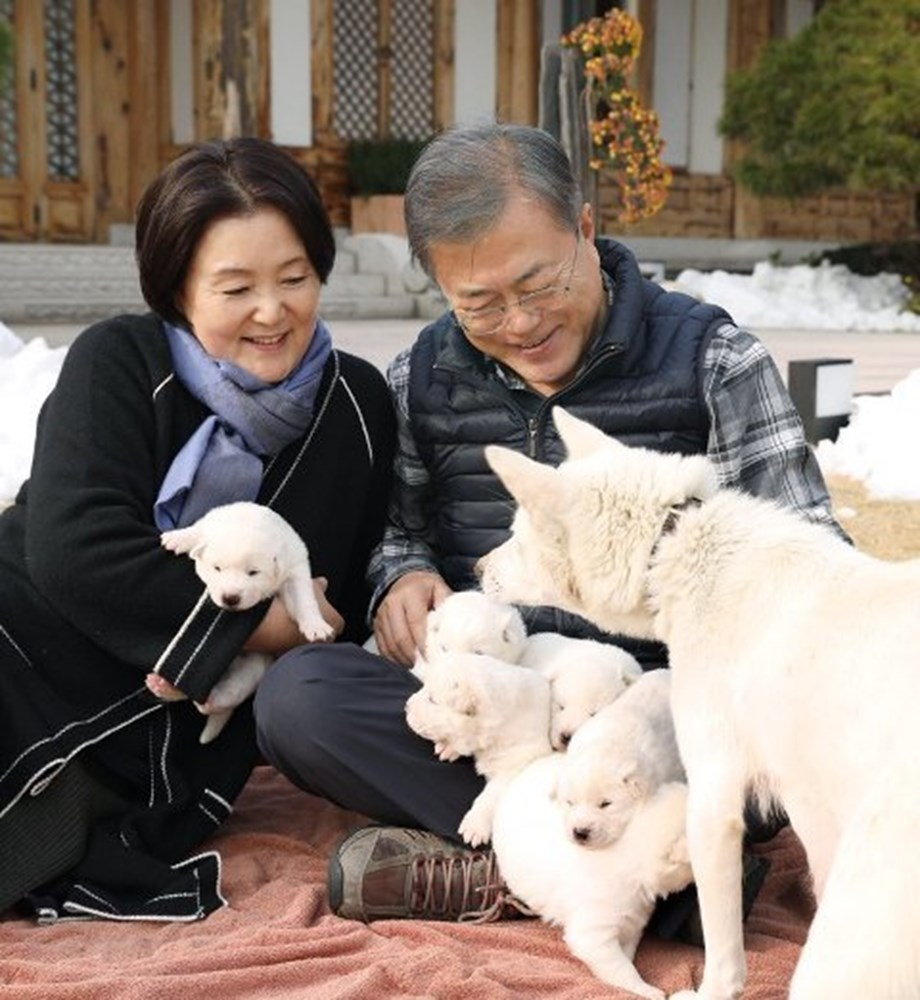 Gift from N. Korea: Prez Moon shares pictures of newborn pups of dog gifted by Kim