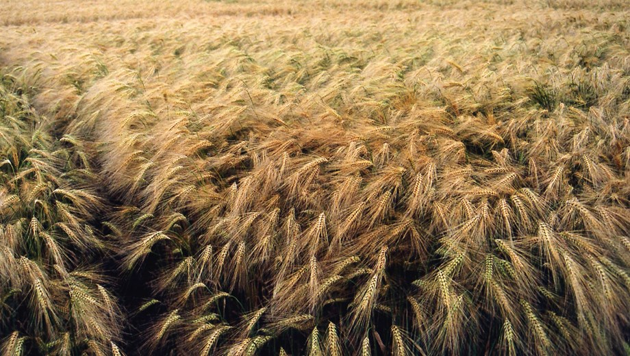 IFC to increase barley production in Ethiopia, pumps out fund in Habesha Breweries