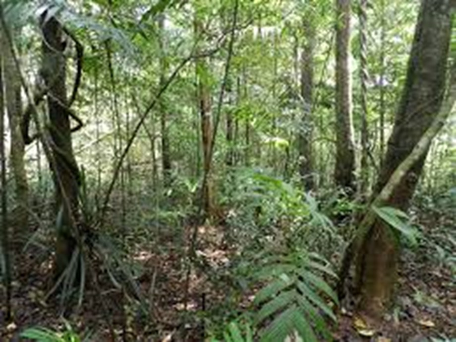 Goa mulls plan to replace non-food plant variety from forests