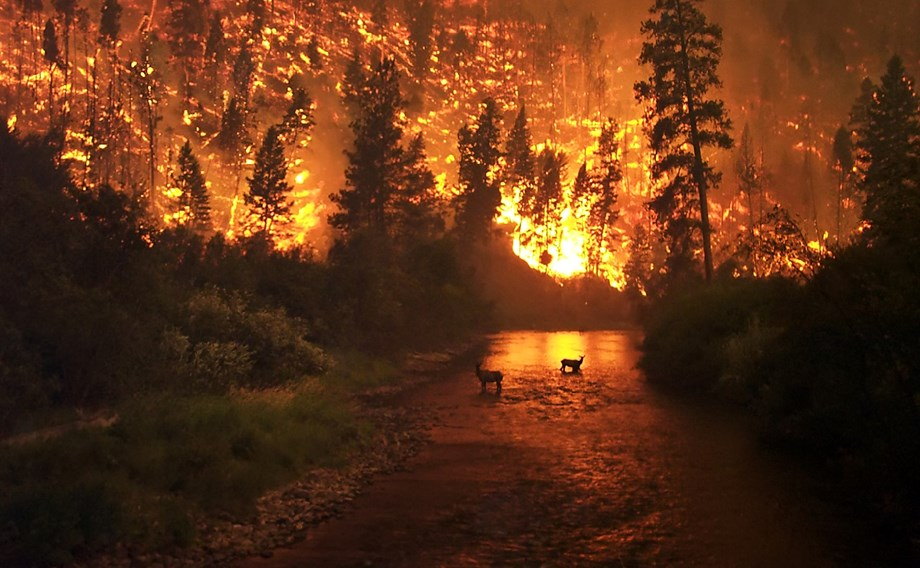 Wildfires in Russia's Siberia could endanger a power plant    Science-Environment