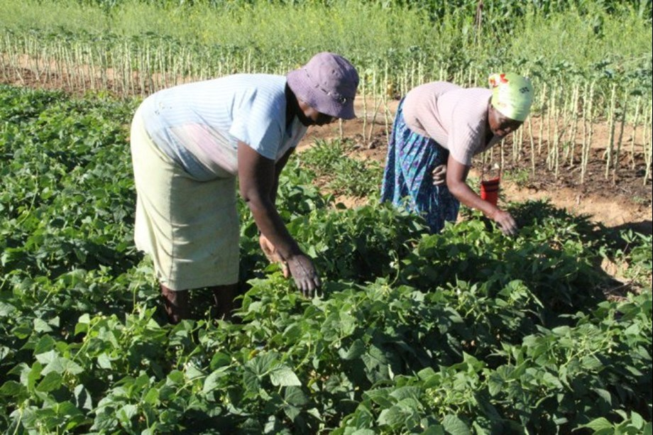Conflicts and dry weather conditions remain causes of food insecurity: Report