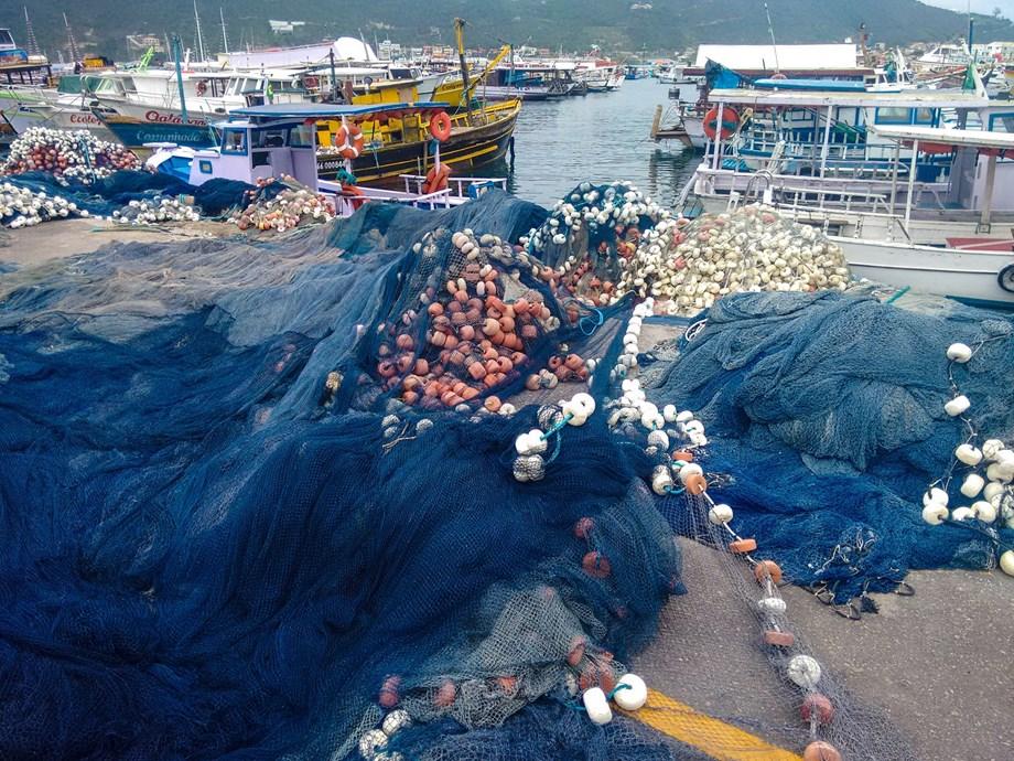 Toxic metals threatening endangered species of eels: Study