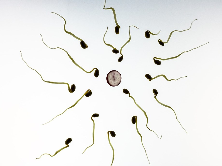 Posthumous sperm donation should be allowed, say UK experts