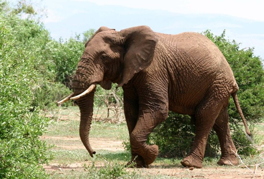 UK collaborates with Angola in training to control crimes against wildlife