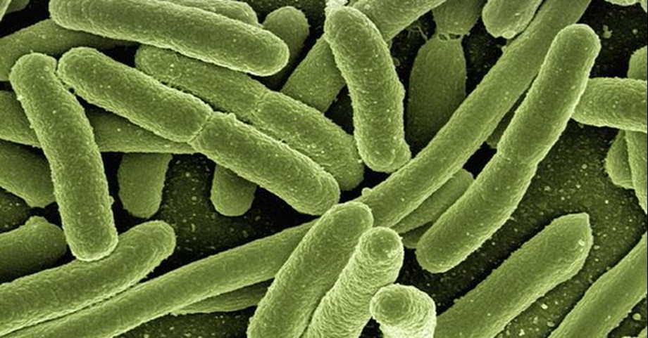 Farmer termites can control weedy parasitic fungi: Study