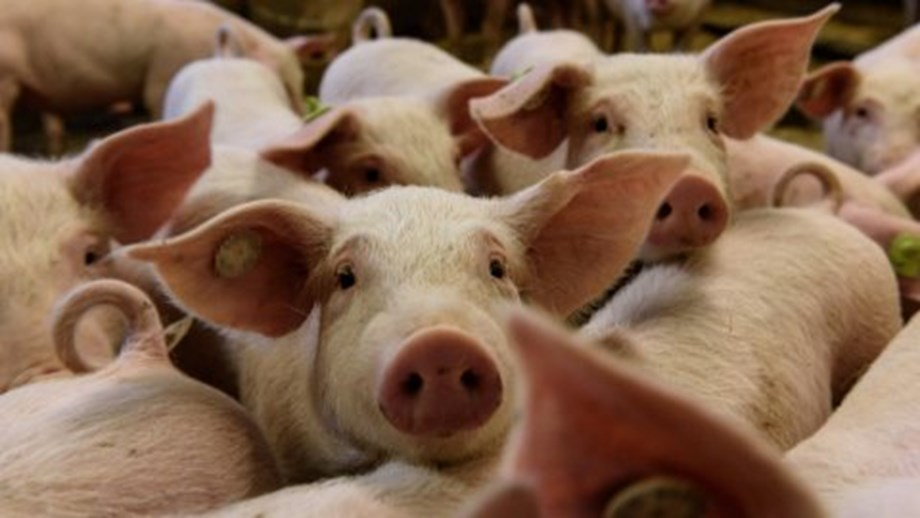 China's agriculture ministry says African swine fever outbreaks originated outside country