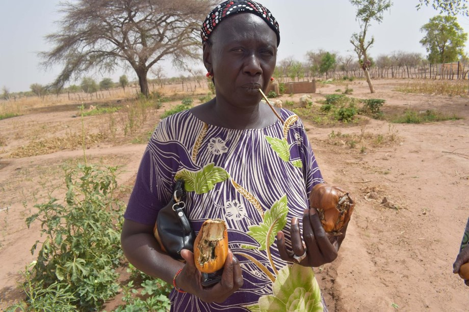 Planting drought-resistant trees in Lake Chad region to restore vegetation cover