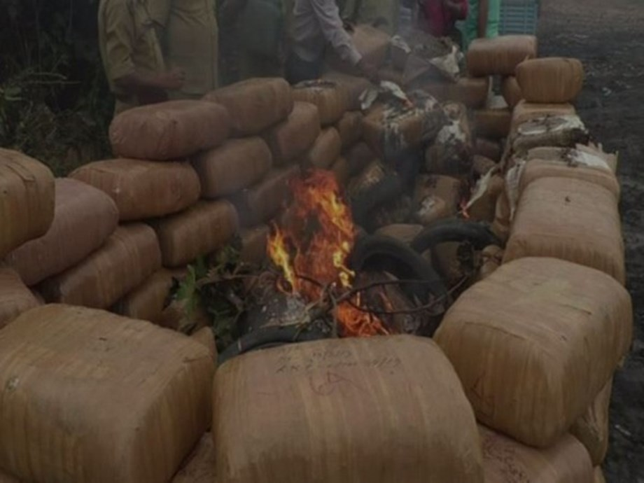 Tripura Police burns 6,300 kg of marijuana worth Rs 3.15 crore