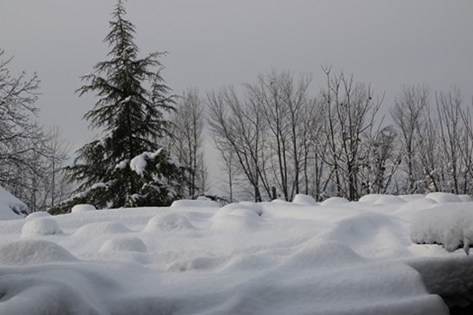 Police rescues 45 people stranded in Himachal after snowfall