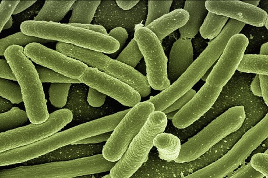 Antibiotic resistance in bacteria spreads much faster than previously thought