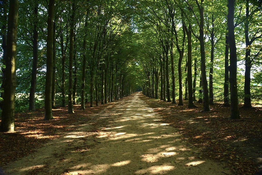 Centres nod to construct bunds,embankments in 10 ha of forest